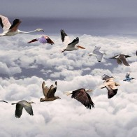 All Birds Widescreen Wallpapers