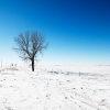 alone in snow,nature landscape Wallpapers, nature landscape Wallpaper for Desktop, PC, Laptop. nature landscape Wallpapers HD Wallpapers, High Definition Quality Wallpapers of nature landscape Wallpapers.