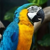 Download amazing parrot wallpapers, amazing parrot wallpapers Free Wallpaper download for Desktop, PC, Laptop. amazing parrot wallpapers HD Wallpapers, High Definition Quality Wallpapers of amazing parrot wallpapers.