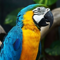 Amazing Parrot Wallpapers