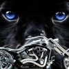 Download american chopper 2 wallpaper, american chopper 2 wallpaper  Wallpaper download for Desktop, PC, Laptop. american chopper 2 wallpaper HD Wallpapers, High Definition Quality Wallpapers of american chopper 2 wallpaper.