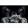 American Chopper 2 Wallpaper