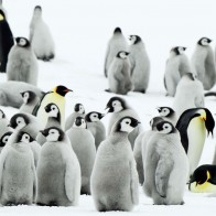 Antarctica Penguins Wallpapers
