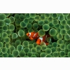 Apple Fish Hd Widescreen Wallpapers