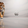 Download apple mac tiger wallpapers, apple mac tiger wallpapers Free Wallpaper download for Desktop, PC, Laptop. apple mac tiger wallpapers HD Wallpapers, High Definition Quality Wallpapers of apple mac tiger wallpapers.
