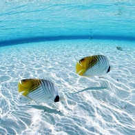 Aquarium Fish 3 Hd Wallpapers