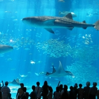 Aquarium Fish 9 Hd Wallpapers