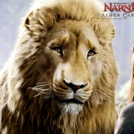 Aslan The Chronicles Of Narnia Wallpaper