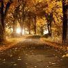 Download autumn breeze wallpapers, autumn breeze wallpapers Free Wallpaper download for Desktop, PC, Laptop. autumn breeze wallpapers HD Wallpapers, High Definition Quality Wallpapers of autumn breeze wallpapers.