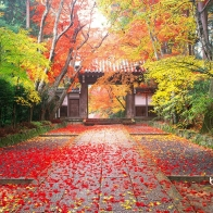 Autumn In Japan Wallpapers