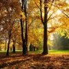 Download autumn season wallpapers, autumn season wallpapers Free Wallpaper download for Desktop, PC, Laptop. autumn season wallpapers HD Wallpapers, High Definition Quality Wallpapers of autumn season wallpapers.