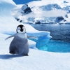 Download baby mumble in happy feet 2 wallpapers, baby mumble in happy feet 2 wallpapers Free Wallpaper download for Desktop, PC, Laptop. baby mumble in happy feet 2 wallpapers HD Wallpapers, High Definition Quality Wallpapers of baby mumble in happy feet 2 wallpapers.