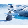 Baby Mumble In Happy Feet 2 Wallpapers