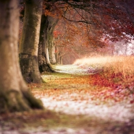 Beech Autumn Trees Wallpapers