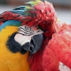 Download best friends macaws wallpapers, best friends macaws wallpapers Free Wallpaper download for Desktop, PC, Laptop. best friends macaws wallpapers HD Wallpapers, High Definition Quality Wallpapers of best friends macaws wallpapers.