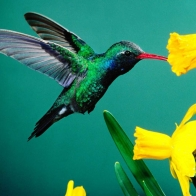 Birds Blooms Hd Wallpapers