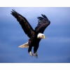 Birds Pictures Gallery Hd Wallpapers