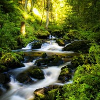 Black Forest In Germany Wallpapers