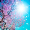 Download blooming spring wallpapers, blooming spring wallpapers Free Wallpaper download for Desktop, PC, Laptop. blooming spring wallpapers HD Wallpapers, High Definition Quality Wallpapers of blooming spring wallpapers.