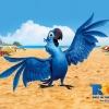 Download blu bird in rio wallpapers, blu bird in rio wallpapers Free Wallpaper download for Desktop, PC, Laptop. blu bird in rio wallpapers HD Wallpapers, High Definition Quality Wallpapers of blu bird in rio wallpapers.
