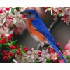Bluebird Hd Wallpapers