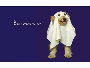 Boo Wow Wow Wallpapers