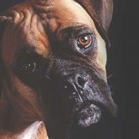 Boxer Dog Cover