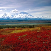 Brilliant Colors Of Denali National Park Alaska