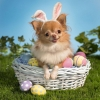 Download bunny wishes you a happy easter wallpapers, bunny wishes you a happy easter wallpapers Free Wallpaper download for Desktop, PC, Laptop. bunny wishes you a happy easter wallpapers HD Wallpapers, High Definition Quality Wallpapers of bunny wishes you a happy easter wallpapers.