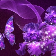 Butterfly 23 Hd Wallpapers