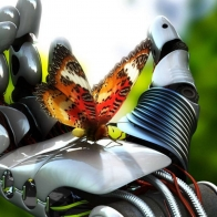 Butterfly 4 Hd Wallpapers