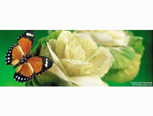 Butterfly And Flower Cover