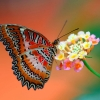 Download butterfly on flower wallpapers, butterfly on flower wallpapers Free Wallpaper download for Desktop, PC, Laptop. butterfly on flower wallpapers HD Wallpapers, High Definition Quality Wallpapers of butterfly on flower wallpapers.
