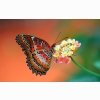 Butterfly On Flower Wallpapers
