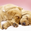 Download canine cuddles wallpapers, canine cuddles wallpapers Free Wallpaper download for Desktop, PC, Laptop. canine cuddles wallpapers HD Wallpapers, High Definition Quality Wallpapers of canine cuddles wallpapers.