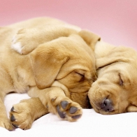 Canine Cuddles Wallpapers