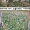 Download capture it remember it cover, capture it remember it cover  Wallpaper download for Desktop, PC, Laptop. capture it remember it cover HD Wallpapers, High Definition Quality Wallpapers of capture it remember it cover.