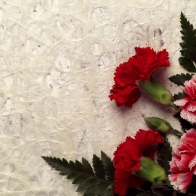 Carnation Decor