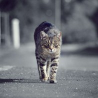 Cat 3 Hd Wallpapers