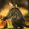 Download cat arms around friendship wallpapers, cat arms around friendship wallpapers  Wallpaper download for Desktop, PC, Laptop. cat arms around friendship wallpapers HD Wallpapers, High Definition Quality Wallpapers of cat arms around friendship wallpapers.