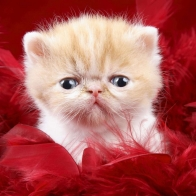 Cat Bagronds Hd Wallpapers