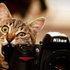 Download cat camera funny, cat camera funny  Wallpaper download for Desktop, PC, Laptop. cat camera funny HD Wallpapers, High Definition Quality Wallpapers of cat camera funny.