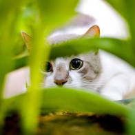Cat Hiding Wallpapers