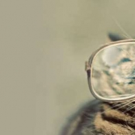 Cat With Glasses Cover