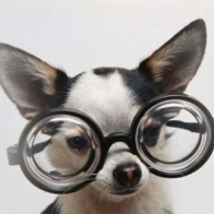 Chihuahua With Glasses Cover