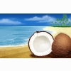 Coconuts Hd Wide