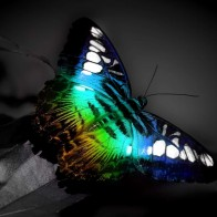 Colorful Butterfly Wallpapers