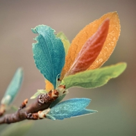 Colorful Leaves Wallpapers