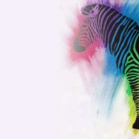 Colorful Zebra Cover