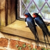 Download couple birds wallpapers, couple birds wallpapers Free Wallpaper download for Desktop, PC, Laptop. couple birds wallpapers HD Wallpapers, High Definition Quality Wallpapers of couple birds wallpapers.
